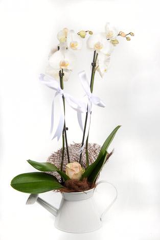 demlikde beyaz çifli orkide