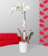 Beyaz Orkide  Tüm Türkiye