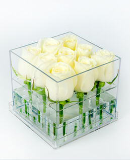 Kare Plekside Beyaz Güller
