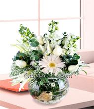 Akvaryumda Şebboy ve Beyaz Güller