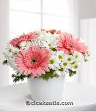 Pembe Gerbera ve Kýr Çiçekleri