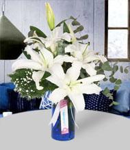 Mavi Rüya Beyaz Lilyumlar