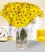 Şeffaf silindir vazoda sarı papatyalar
