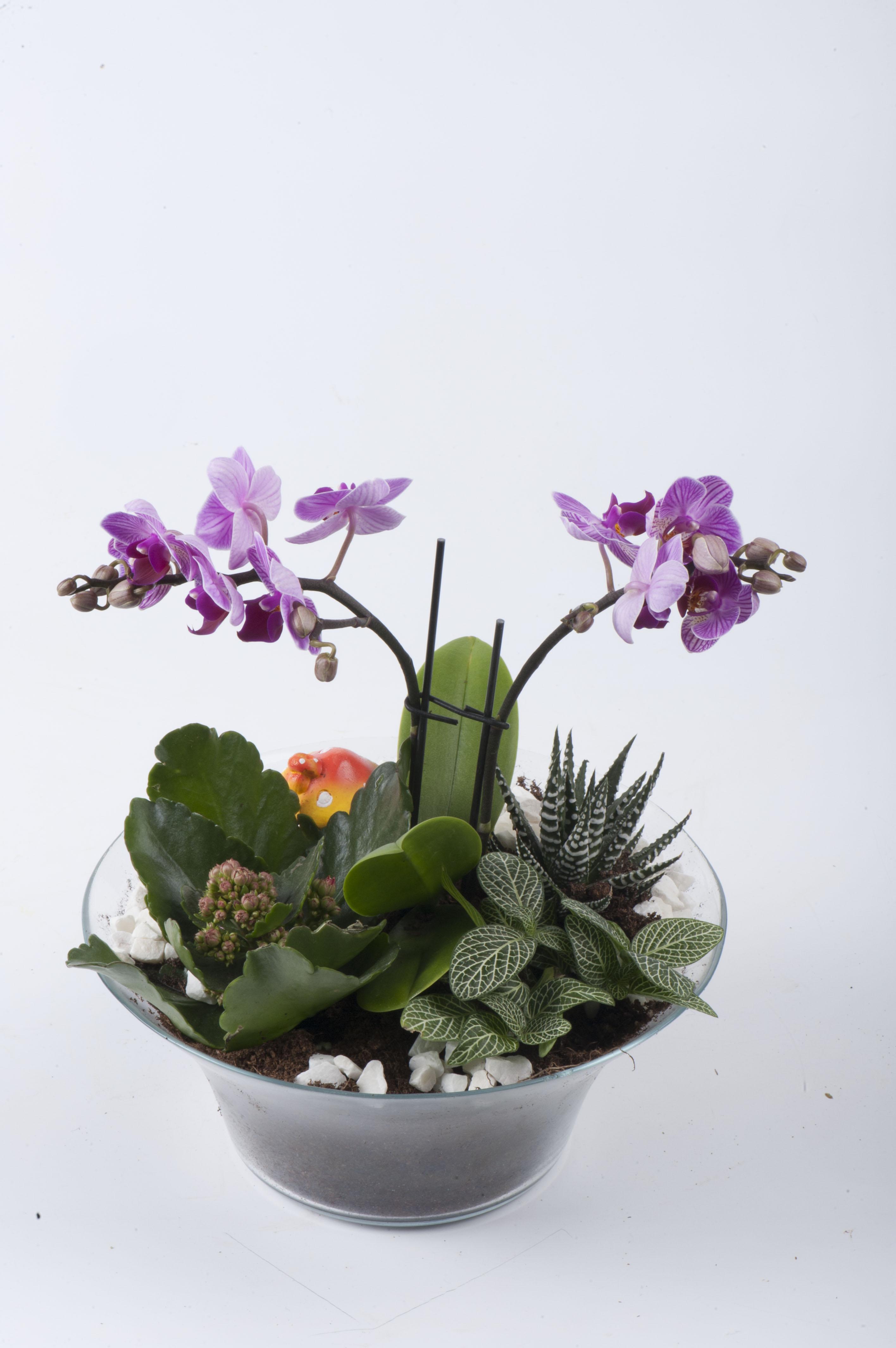 orkidenin aşkı