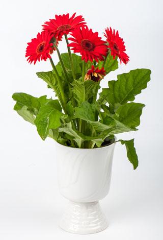 annem için çiçek