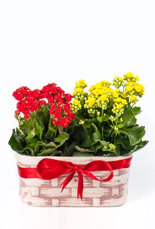 anneme özel çiçek